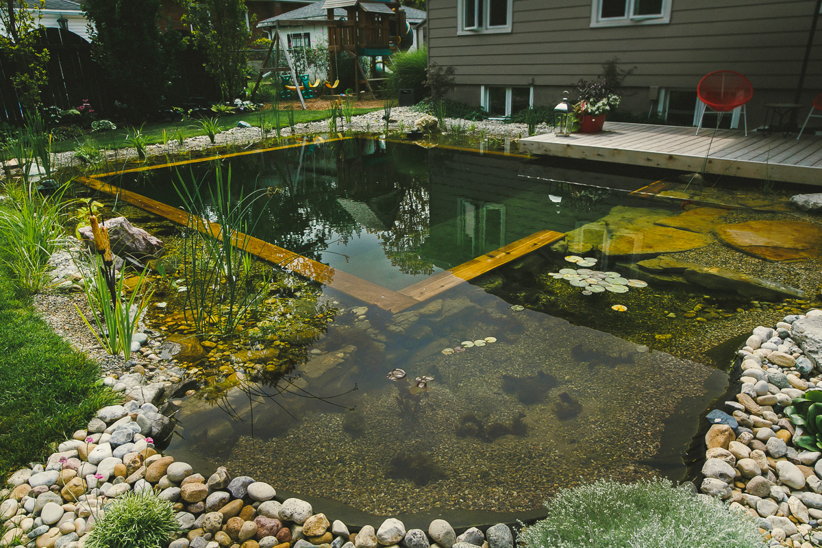 Schwimmingpool Natur Passion Pond & Pond | Pools In Stratford, St Marys