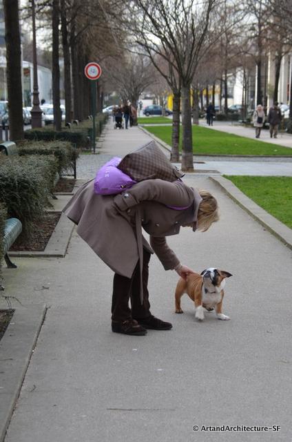 Dogs in Paris