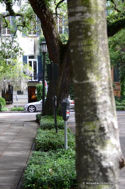 Tree Lawn