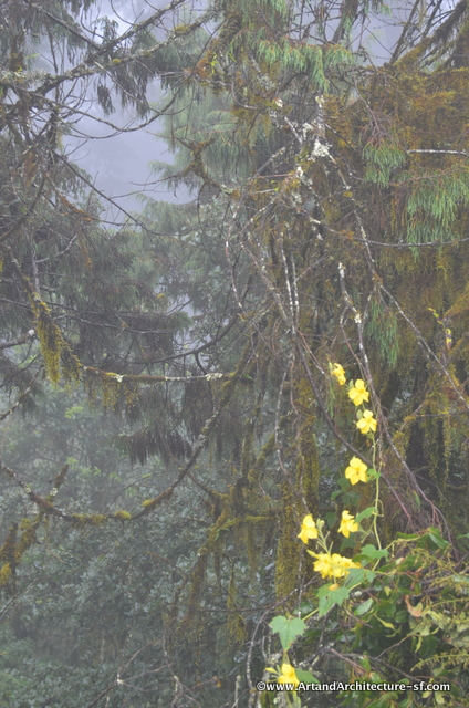The mist on Duch Pass