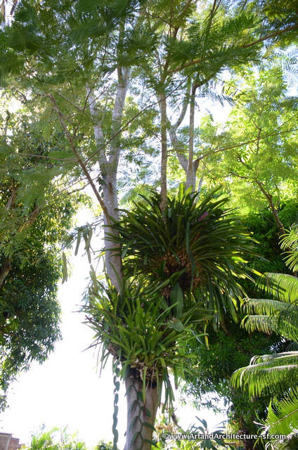 Fern and Orchid Garden