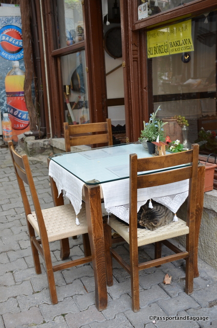 Stray cats and dogs are rampant throughout this part of Turkey, more than one would expect.