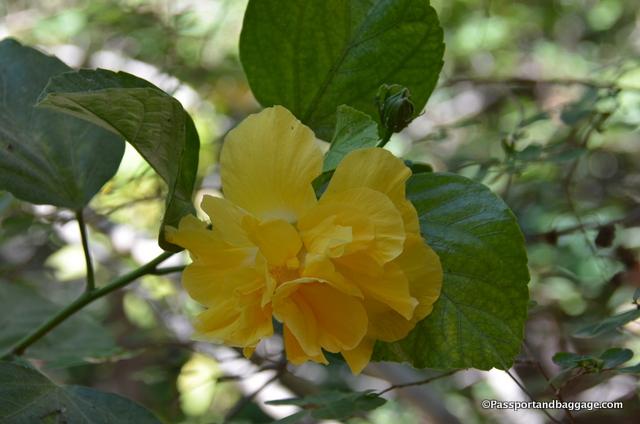 From Juanita's Garden