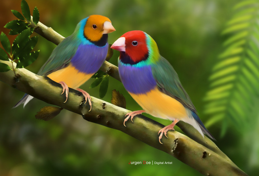 True Love Quotes Wallpaper Hd Subhana Llah Gouldian Finch Images Pass The Knowledge