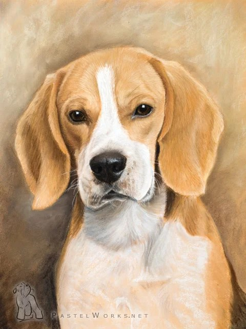 Husky Dog Hd Wallpapers Beagle In Pastels Pet Portraits Amp Animal Art