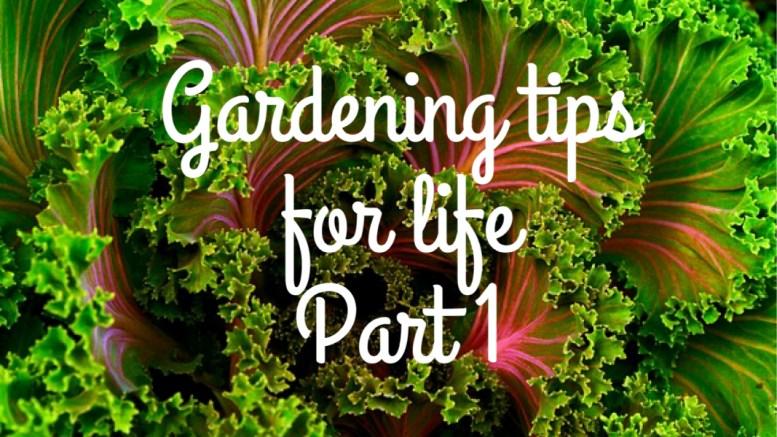gardening tips for life