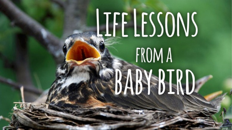 life lessons from a baby bird