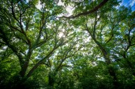 29127_Tree_Tops