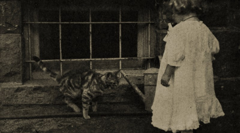 The Cat and the Child by Jean M. Hutchinson about 1908