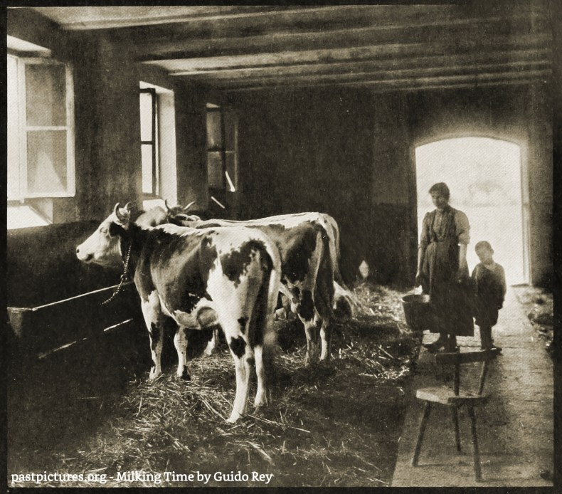 Milking Time by Guido Rey about 1908