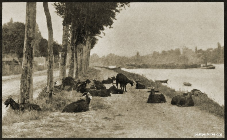 Goats Along the Seine by Alfred Stieglitz 1894