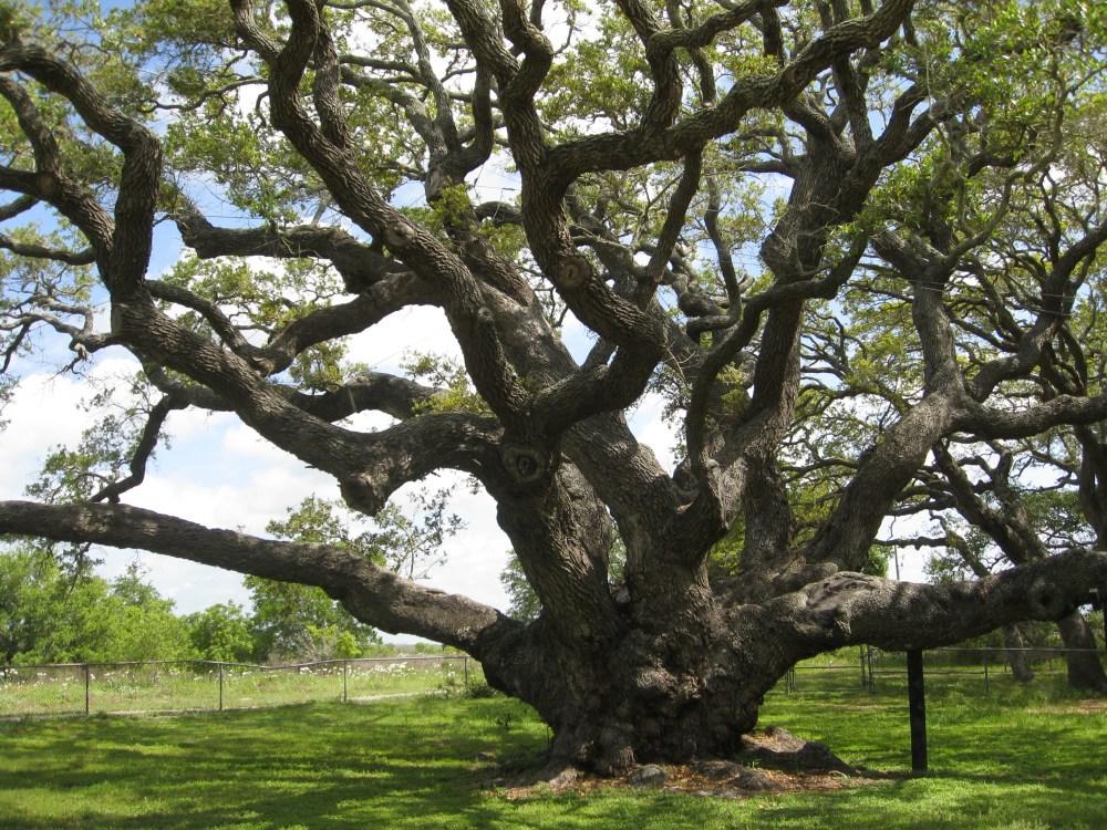 Not Ashamed to be a Tree Hugger (1/2)