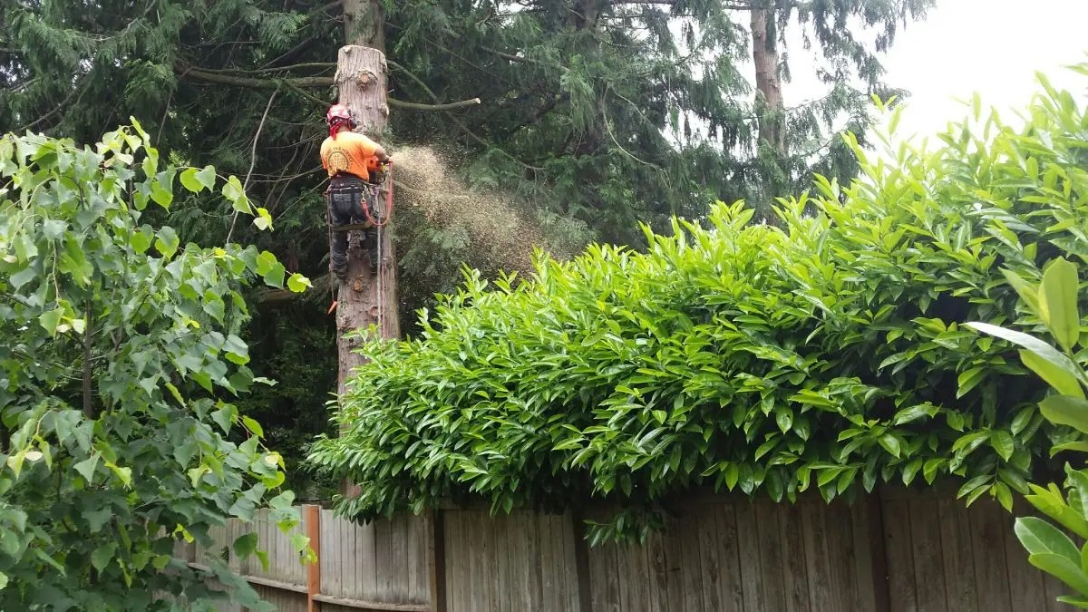 Trees And Shrubs How Much Does It Really Cost To Trim Or Remove Trees And Shrubs