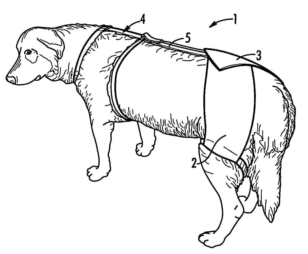 compression harness for dogs
