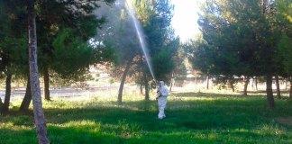 Un operario realiza una intervención sobre unos pinos para acabar con la procesionaria