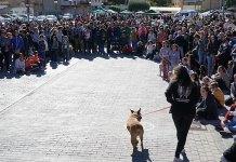 Instante del desfile de perros de las protectoras