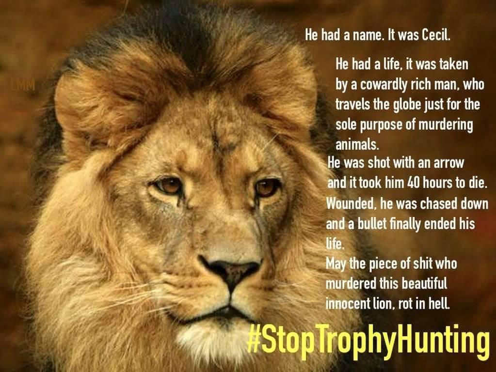 Psychology Wallpaper Quotes Cecil The Lion Sotto Voce