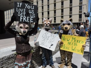 Wolf Rally--Albuquerque, NM. April 28, 2016. Photo by: Jean Ossorio