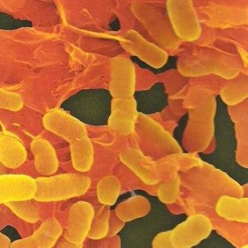 killer-bacteria