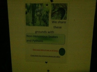 beware fo snakes at mount warning resort camp site