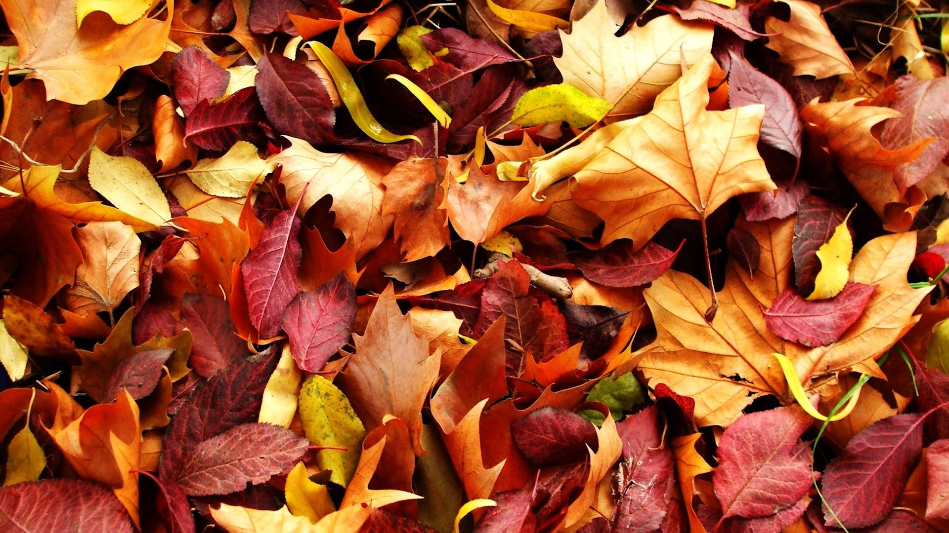 4k Central Park In The Fall Wallpaper Fall Foliage Desktop Wallpapers 70 Background Pictures
