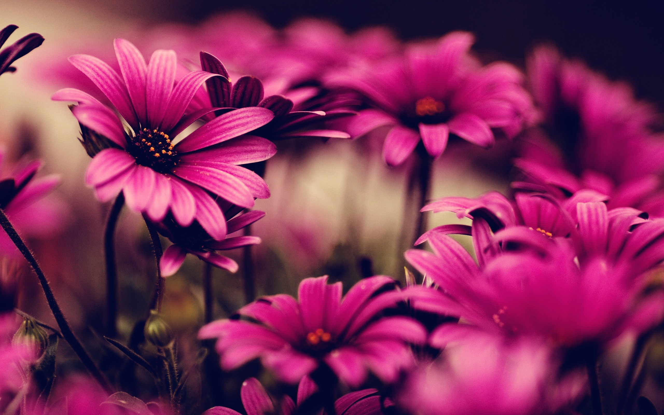 Wallpaper Lila Wallpapers Flowers 72 Background Pictures