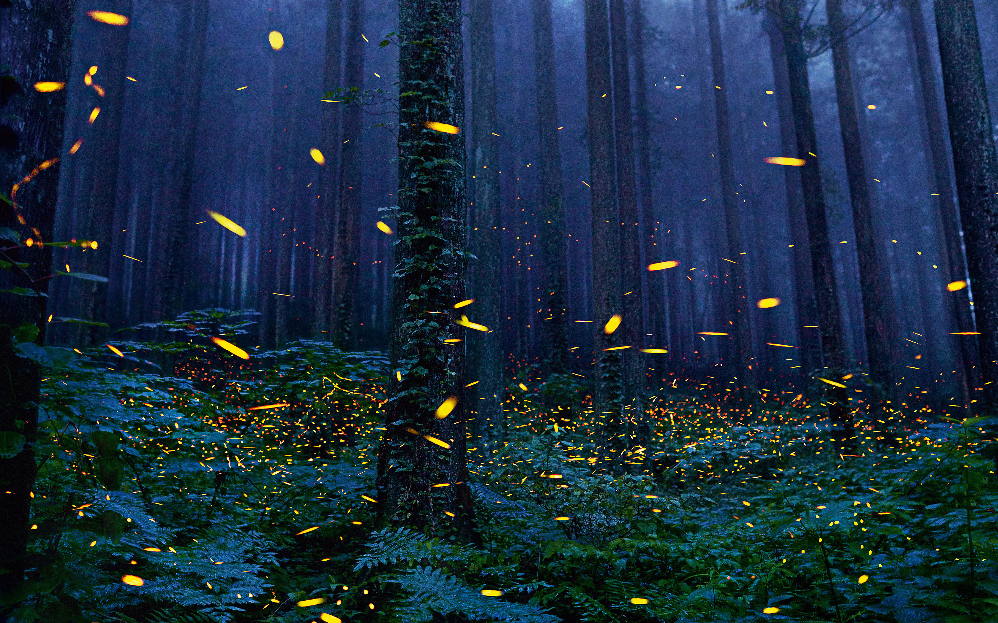 Fireflies Wallpapers 75 Background Pictures