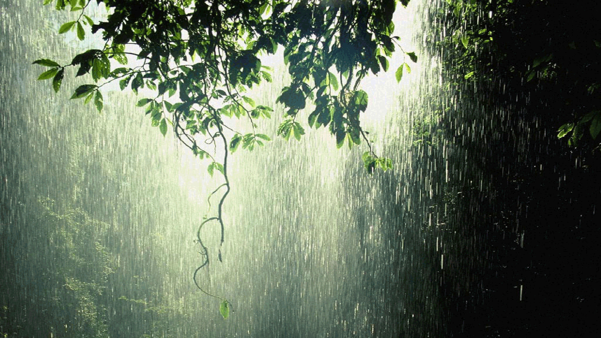 Summer Android Wallpaper Quotes Rain Wallpapers Hd 84 Background Pictures