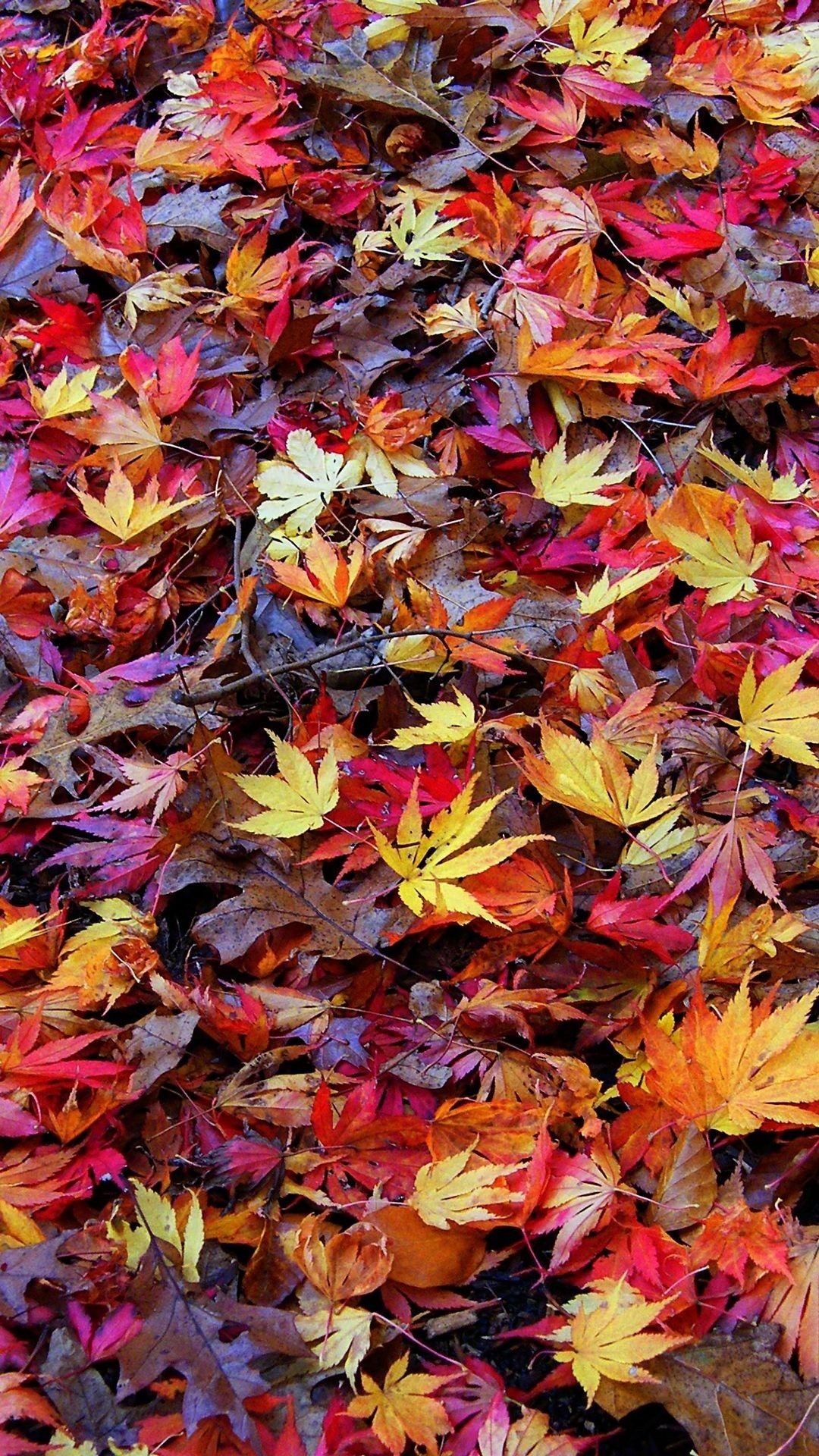 Fall Android Wallpaper Beautiful Fall Pictures Wallpapers 63 Background Pictures