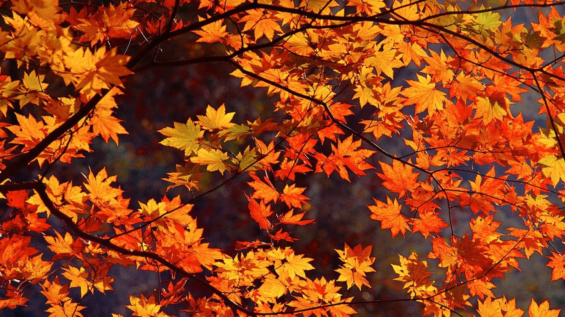 Fall Leaves Hd Mobile Wallpaper Fall Themed Wallpapers Desktop 61 Background Pictures