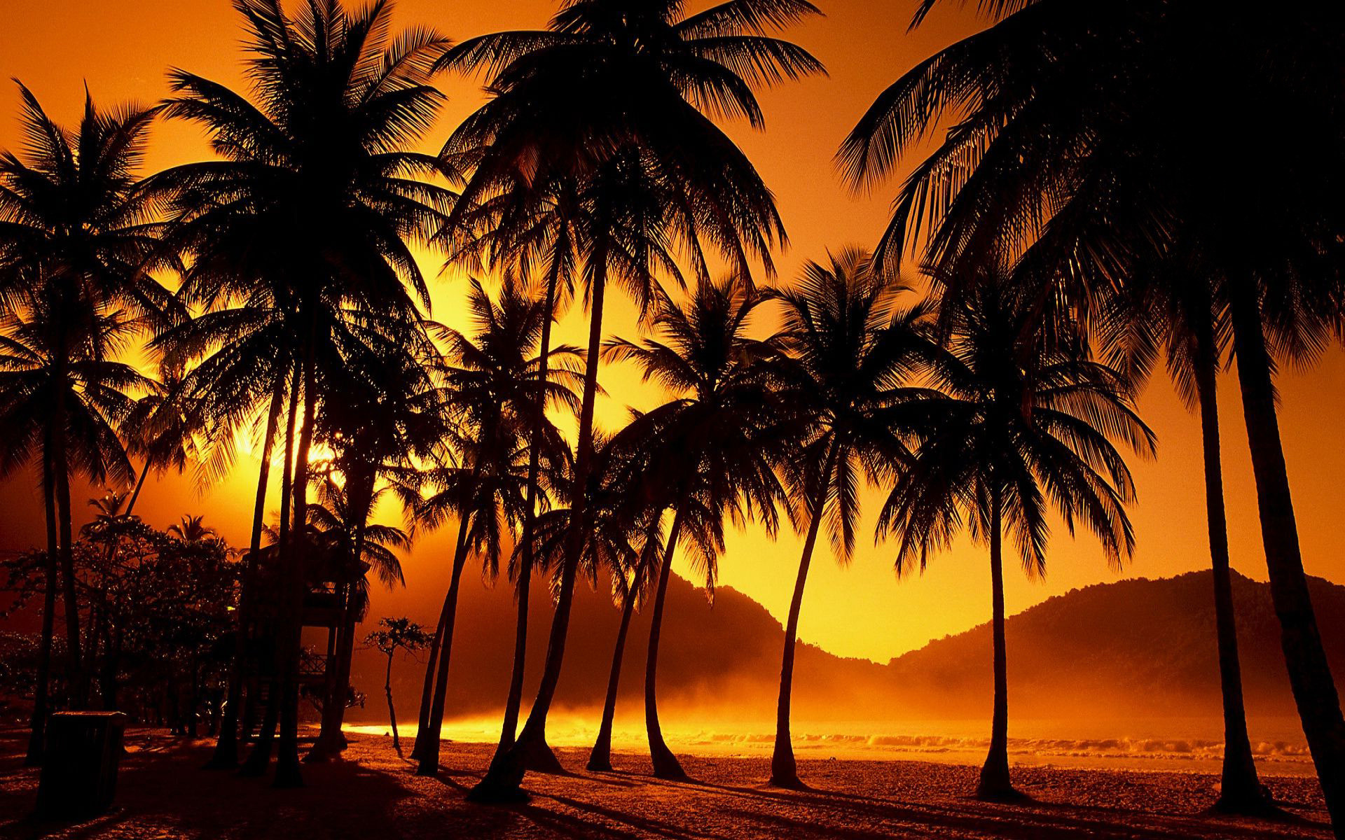 Palm Tree Wallpapers Palm Tree Desktop Wallpapers 73 Background Pictures