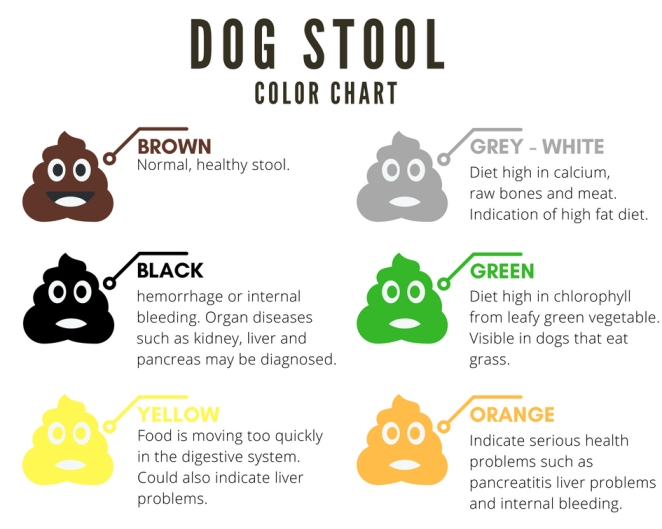 A Complete Guide To Dog39s Stool Color Shape