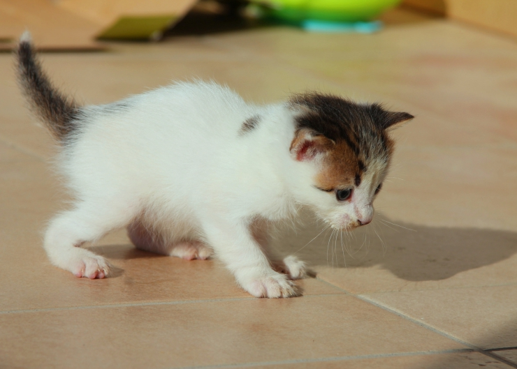 how to find newborn kittens outside