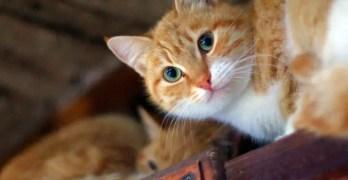 How to Stop Door Darting Behaviour in Cats