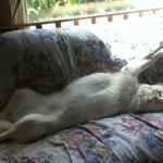Communication vs. Control: the pitfalls of coercion in dog training