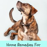 Dog Itch Relief Home Remedies