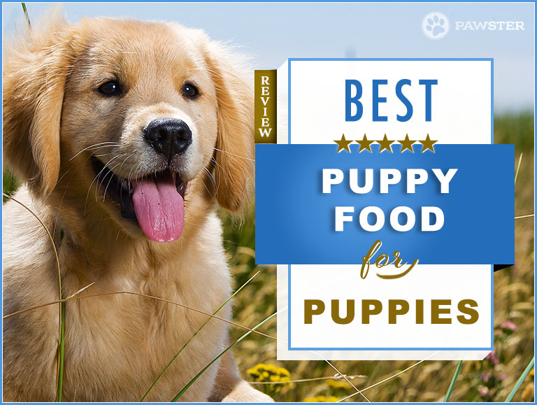 Blue Buffalo Large Breed Puppy Feeding Chart Best Of Top 5 Bestlife