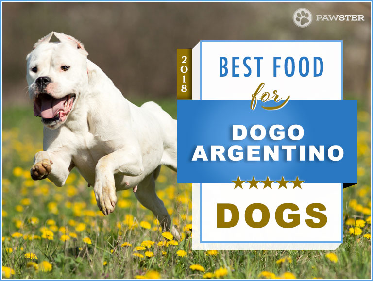7 Best Foods To Feed Your Adult And Puppy Dogo Argentino