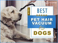 Best Vacuum For Pet Hair And Thick Carpet | Review Home Co