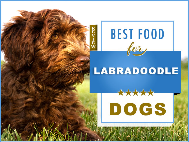 7 Best Foods to Feed an Adult and Puppy Labradoodle with Feeding Guide