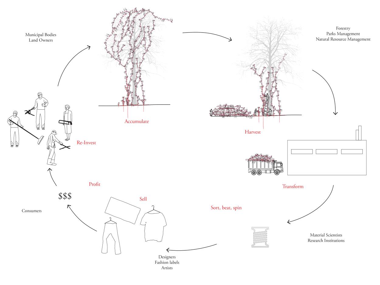 kudzu plant diagram