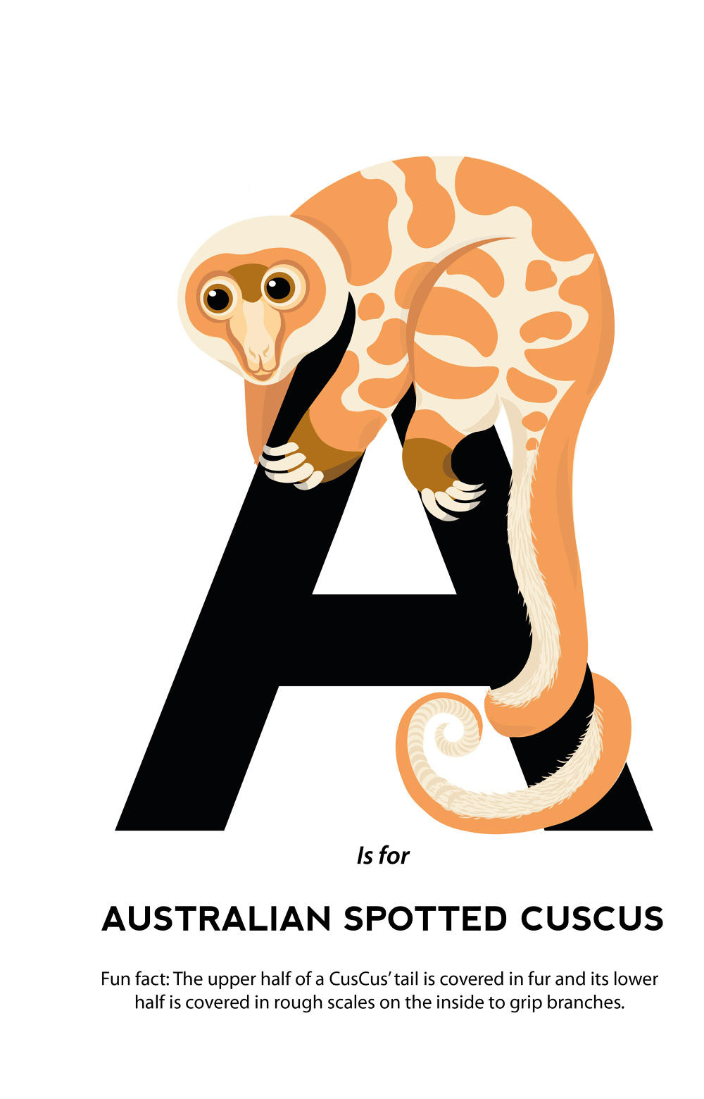 A to z unusual animals from around the world charlotte
