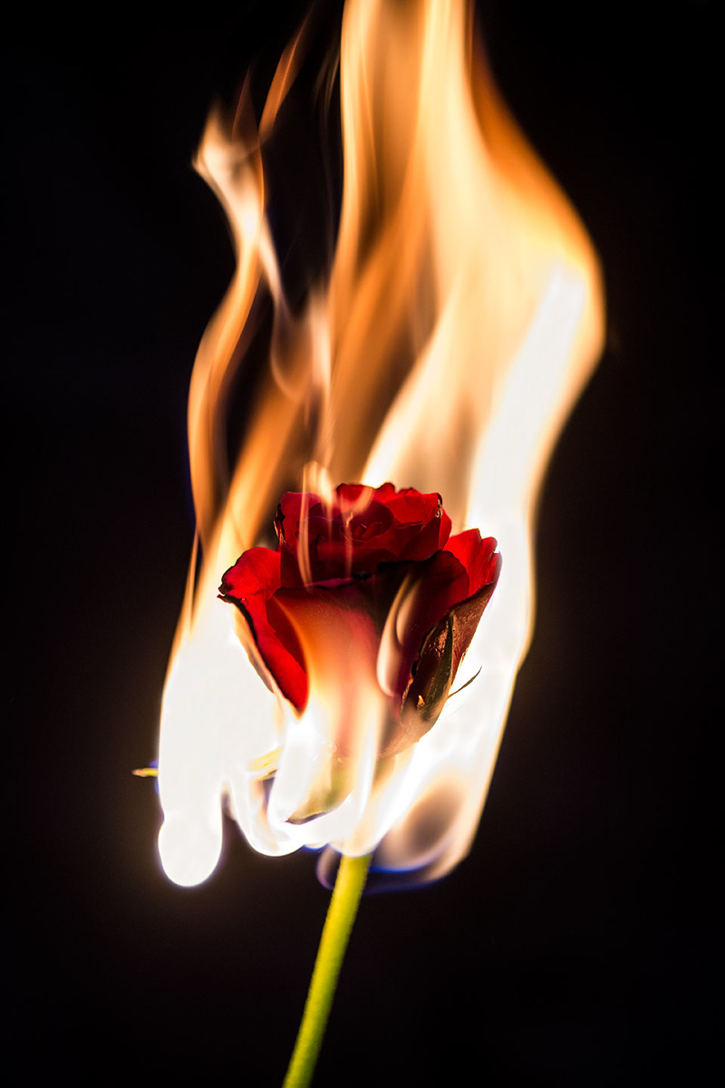 Hd Life Wallpapers Flowers On Fire Ellen Ericsson