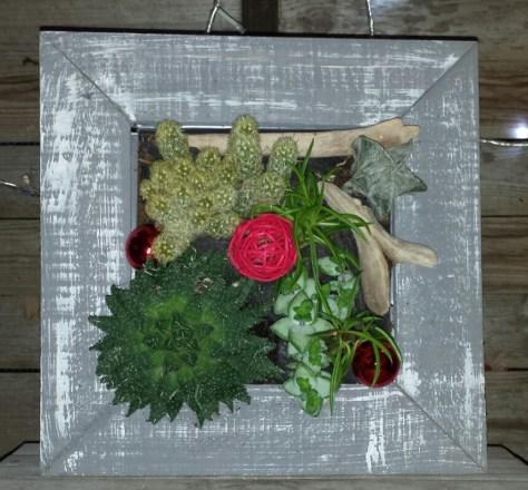 cadre végétal plantes grasses