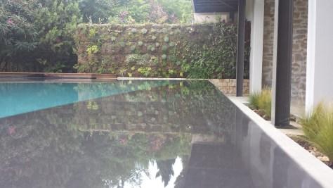 mur vegetal abord piscine