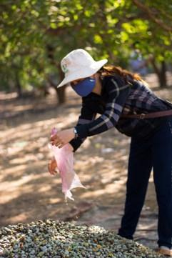 Cette femme collecte les noix de cajou et les garde jusqu'à l'arrivée des camions de ramassage - http://paysansdavenir.com/plongee-au-coeur-de-la-filiere-noix-de-cajou-de-binh-phuoc-vietnam/