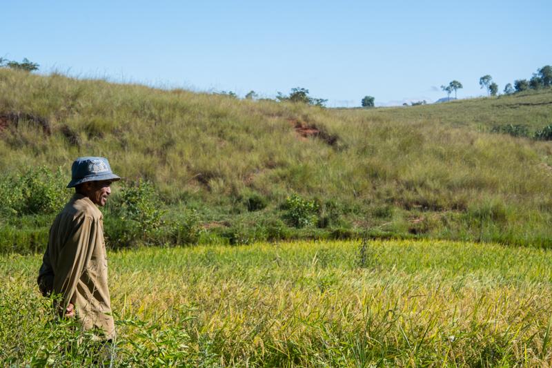 François Dassise face à sa rizière