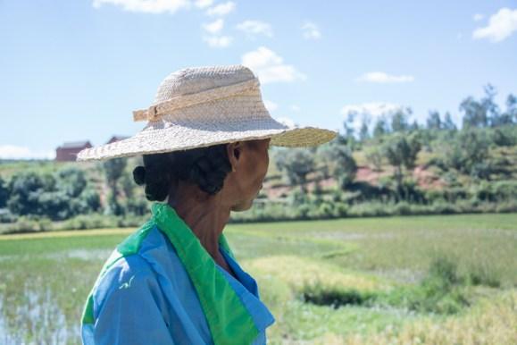 Suzanne nous montre les rizières