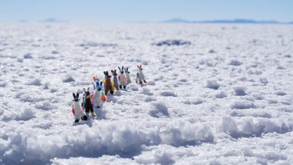 Uyuni - mes minuscules compagnons de voyage !