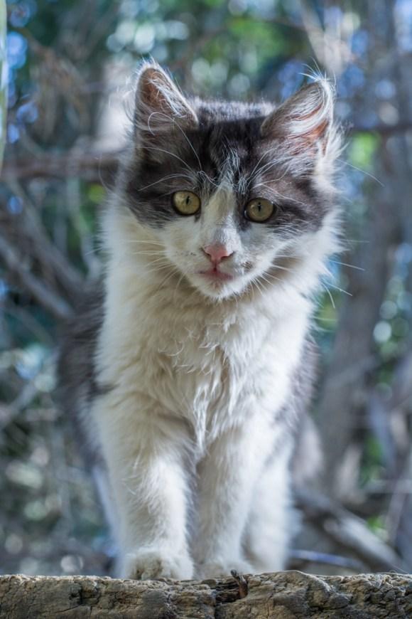 Agroforesterie à Cochabamba - l'un de leurs chats